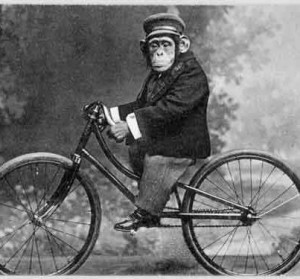 monkeyonbike